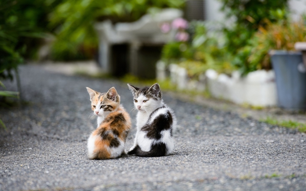 Okay, since the last known image is a flash file, have some cute kittens instead.